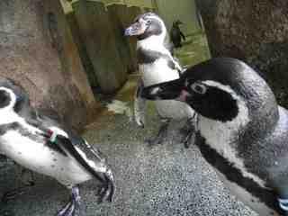 2010.07.20ペンギンって飼えるの?.jpg