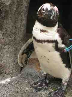 2010.07.25ワシントン条約とペンギン.jpg
