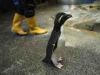 2010.07.27ペンギンの入手.jpg