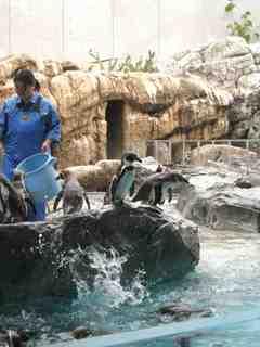 2010.07.28ネットでペンギン.jpg
