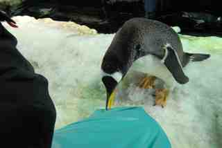 2010.07.28ペンギンのお値段は?.jpg