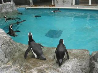 長崎ペンギン水族館2 068.jpg