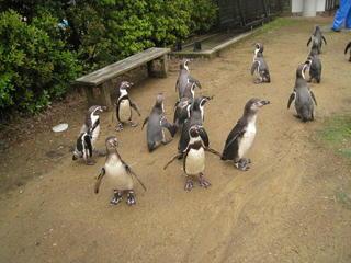 長崎ペンギン水族館2 109.jpg