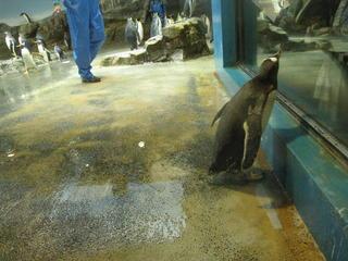 長崎ペンギン水族館2 162.jpg
