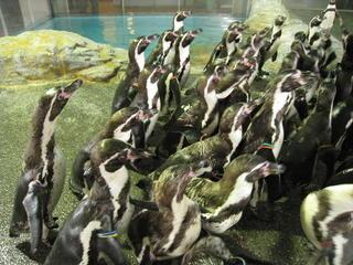 長崎ペンギン水族館2 304.jpg