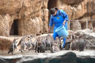 長崎ペンギン水族館1 005.jpg