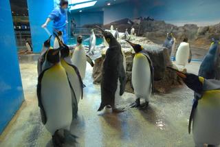 長崎ペンギン水族館1 048.jpg