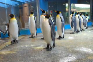 長崎ペンギン水族館1 301.jpg