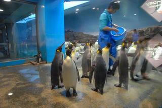 長崎ペンギン水族館1 387.jpg