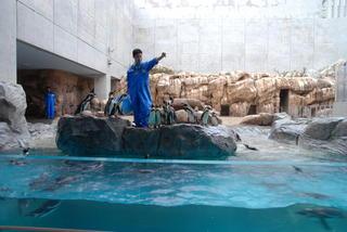 長崎ペンギン水族館1 414.jpg