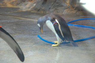 長崎ペンギン水族館1 671.jpg